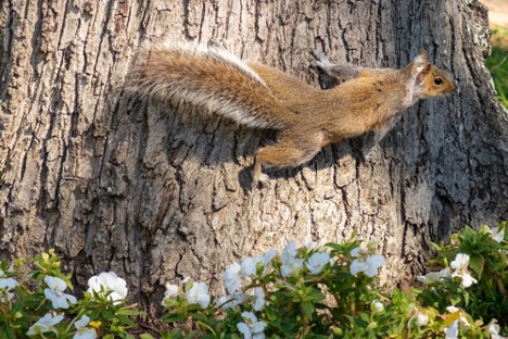 Squirrels, contemplation and love